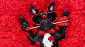 Da wird Schatzi Augen machen! Die 16 schrägsten Geschenke zum Valentinstag