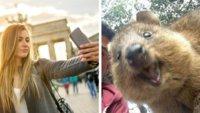 20 Fotos von Tieren, die bessere Selfies machen als du