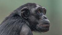 Bahnbrechend: Wie Tierversuche durch Computersimulationen ersetzt werden können