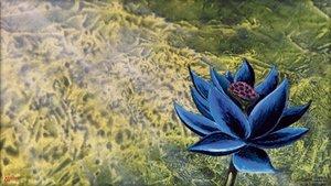 Original verpackter Black Lotus geöffnet, Magic-Fans flippen aus