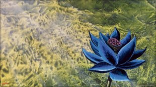 Magic the Gathering: Black Lotus für 166.000 Dollar versteigert