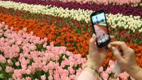 Die besten Garten-Apps für Android und iPhone