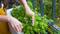 Urban Gardening: Der eigene Garten in der großen Stadt