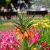 Pflanzen bestimmen: 3 Apps zur Pflanzenerkennung