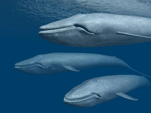 """""""Blue Whale Challenge"""" bei WhatsApp: Was steckt dahinter?"""