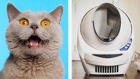 16 verrückte Gadgets, die jede Katze haben muss