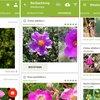 PlantNet Pflanzenbestimmung