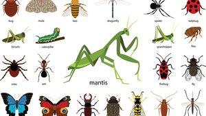 Insekten bestimmen: Die besten Apps zum Erkennen von Insekten