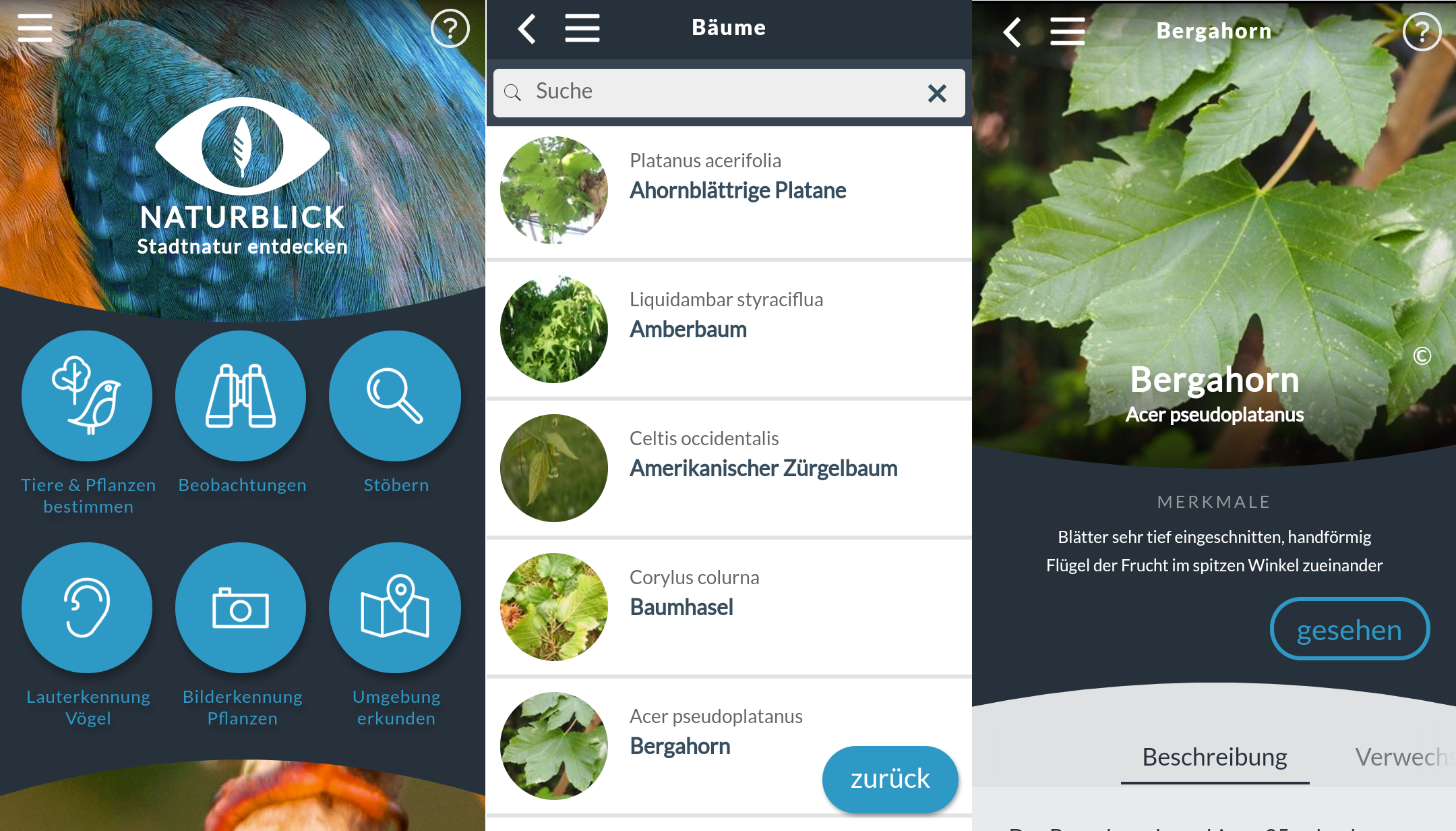 bäume bestimmen: die 3 besten apps für android & ios – giga