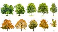 Bäume bestimmen: Die 3 besten Apps für Android & iOS