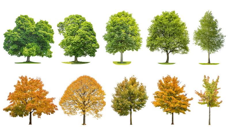 Nach bäume blättern bestimmen Wildkräuter und