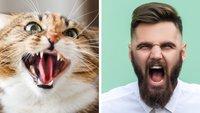 Kotzende Katze zerstört die Übertragung eines Twitch-Streamers