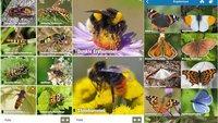 NABU-Insektenwelt-App