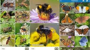 NABU-Insektenwelt