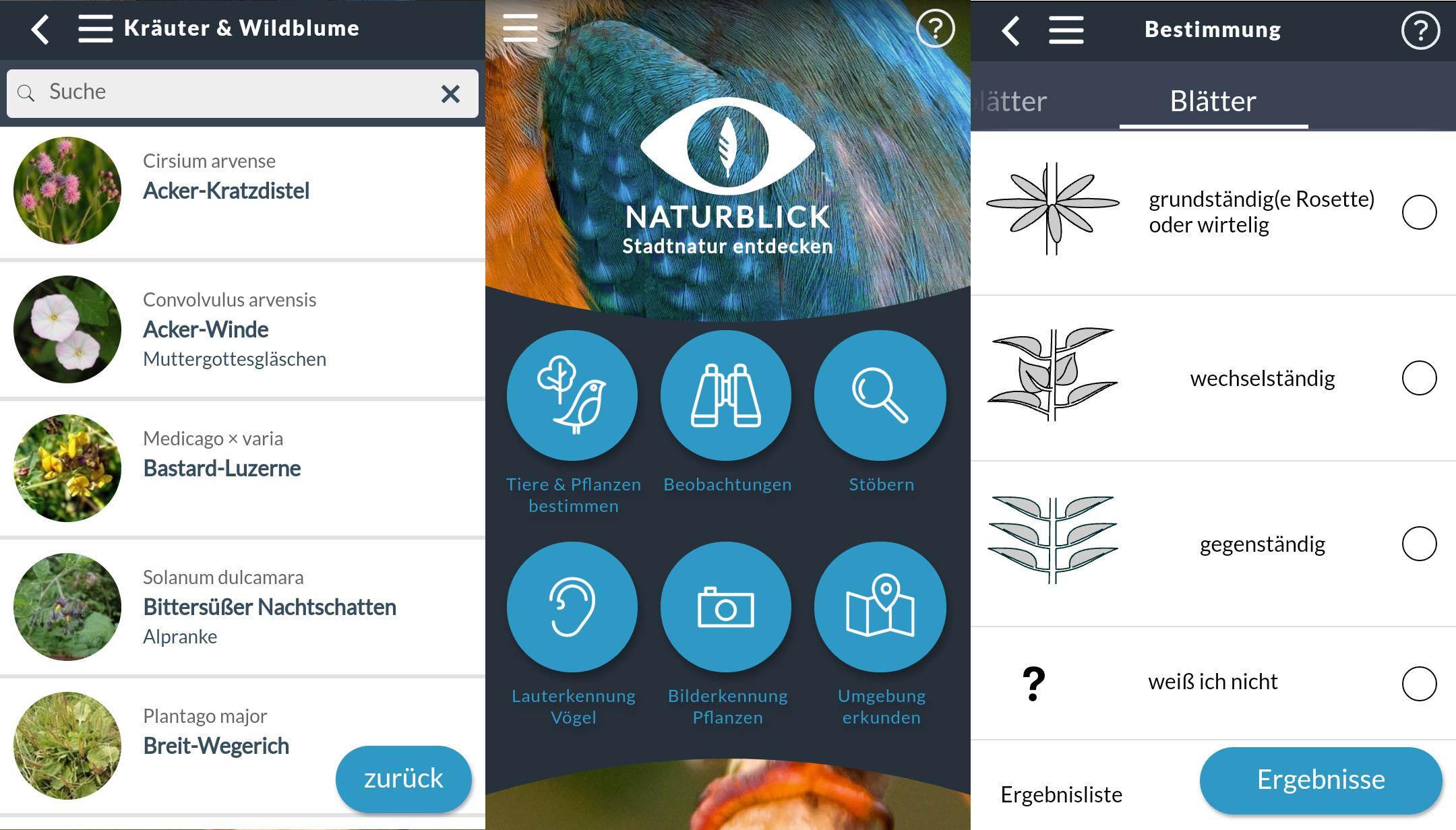 kräuter bestimmen: die besten apps für android & ios – giga