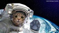 Elite Dangerous: Warum Katzen ganz schlechte Weltraum-Piloten sind