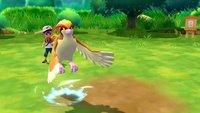Pokémon GO: Wo sind die Taubsis? Spieler beschweren sich, keine Taubsis für Feldforschungsaufträge zu finden