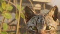 Red Dead Redemption 2: Bitte streicheln! Spieler schreiben Bittgesuch, damit sie Katzen kuscheln dürfen