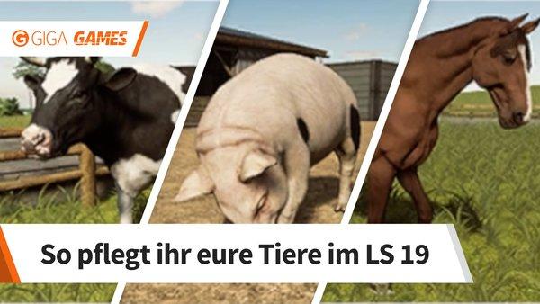 Landwirtschafts Simulator 19 Tiere Kaufen Futtern Und Zuchten Infos Zu Allen Arten