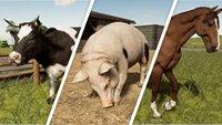 Landwirtschafts-Simulator 19: Tiere kaufen, füttern und züchten - Infos zu allen Arten