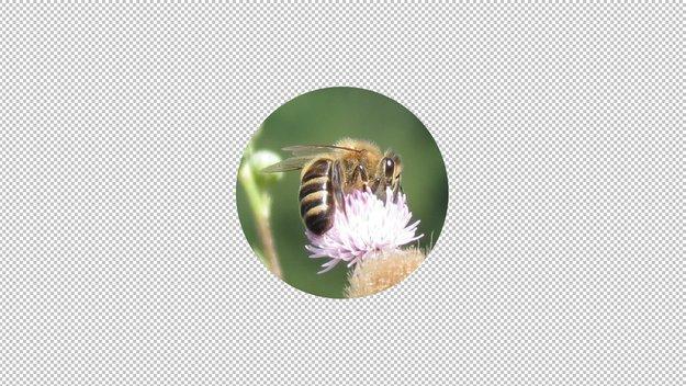 Bild rund ausschneiden: So gehts am PC & Smartphone (GIMP, Photo Studio)