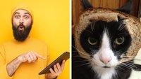 12 verrückte Blogs, die du nur bei Tumblr findest