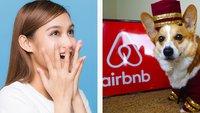 27 Male, in denen Airbnbs eine flauschige Überraschung bereithielten