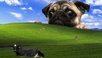 Die 31 genialsten und lustigsten Desktop-Hintergründe, die ihr je gesehen habt