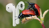 Apple AirPods beim Liebesspiel: Verblüffender Fakt zum Akt