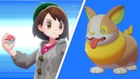 Das Internet liebt das neue Corgi-Pokémon Yamper