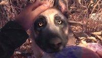 Im Wald-Schocker Blair Witch kannst du a) Hund streicheln und b) völlig verrückt werden