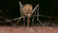 Fallt nicht auf diese Anti-Mücken-Geräte rein – Mücken tun's auch nicht!