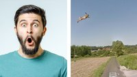 29 Male, in denen Tiere versehentlich auf Google Street View festgehalten wurden