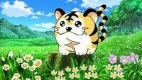 Kotora hätte das süßeste Pokémon von allen sein können