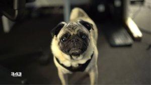 Halo Infinite: Hinter den Alien-Geräuschen steckt ein überraschend süßer Hund