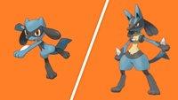 Pokémon Schwert & Schild: Riolu fangen und zu Lucario entwickeln
