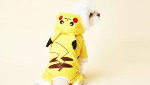 Pokémon: Jetzt gibt es super niedliche Kleidung für Hunde