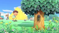 Animal Crossing - New Horizons: 8 Dinge, die ihr täglich machen solltet