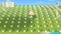 Animal Crossing - New Horizons: Rübenpreise vorhersagen - Tool für Muster und Trends