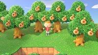 Animal Crossing - New Horizons: Geldbaum richtig pflanzen für maximale Ausbeute