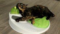 30 Katzen, deren Betriebssystem komplett gecrasht ist