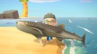 Animal Crossing - New Horizons: Haie fangen - Fundorte, Zeiten und Preise