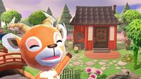Animal Crossing - New Horizons: Die 24 schönsten Inselideen