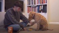 CoD: Warzone ist gar nicht schwer, sogar ein Hund kann es spielen
