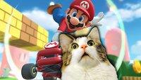 Schlimmer als der blaue Panzer: Faule Katzen machen Mario Kart unsicher