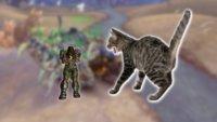 WoW: Spieler vernichtet seine Feinde mit Katzen-Armee