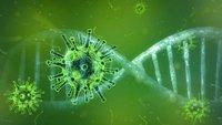 Coronavirus: Forscher zeigen, was bisher keiner sah