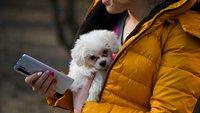 Hunde-Zubehör: Die 5 besten Gadgets für euren Welpen
