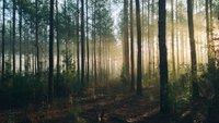 Mythos Wald, gestresste Mütter und Corona auf der Spur: Heute im TV