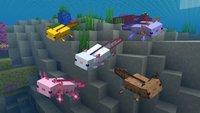 Minecraft: Axolotl in verschiedenen Farben finden, zähmen und züchten